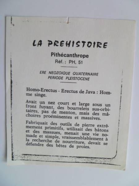 Starlux - Prehistory Notice - Homo-Erectus (ref PH51)