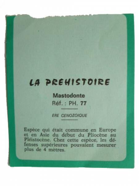 Starlux - Prehistory Notice - Mastodonte (réf PH77)