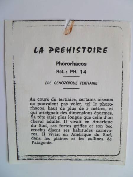 Starlux - Prehistory Notice - Phororhacos (ref PH14)