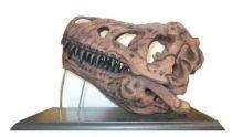 Tyrannosaurus Rex Skull T-REX