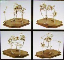 Jun Planning - Corpse Bride - 8\'\' Elder Gutknecht
